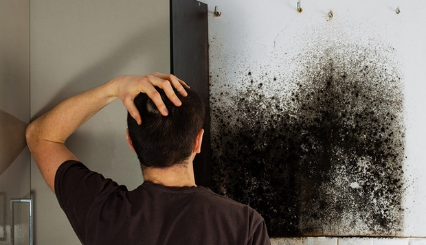 Mold Inspection San Francisco