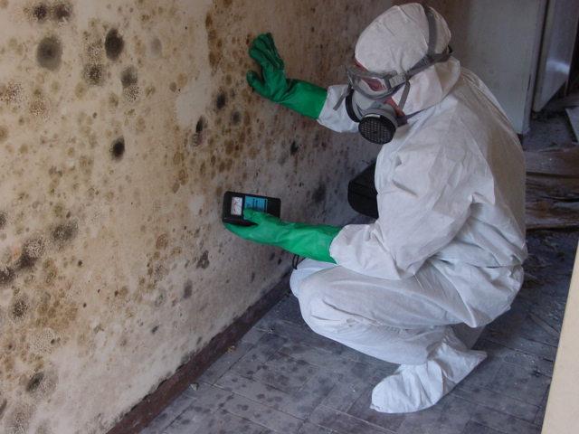 Mold Testing Santa Clarita