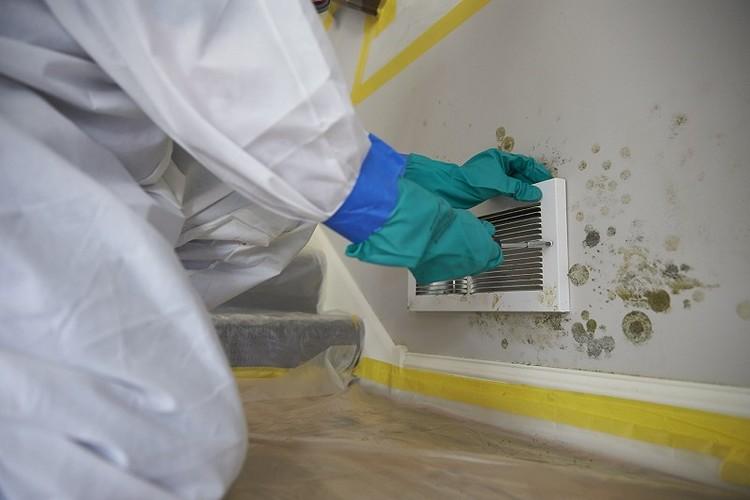 Mold Testing Burbank